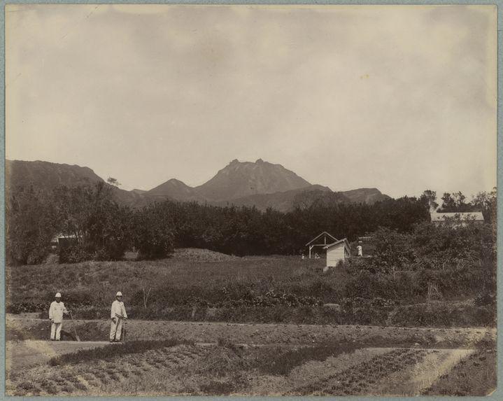 Guadeloupe ; jardin militaire au camp Jacob