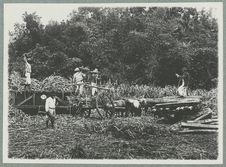 Chargement d'un wagon de cannes