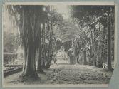 Jardin de Tivoli