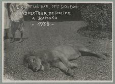 Lion tué par Monsieur Boudou, inspecteur de police, à Bamako