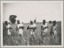 Sans titre [la collecte de blé]