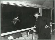 Ary Leblond observant une tortue marine dans l'aquarium du musée