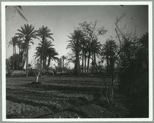 Marrakech [jardin]