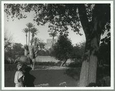 Maroc [jardin]