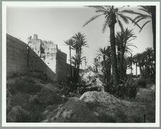 Palmeraie près d'El Ayadi