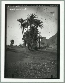Palmiers de la Bad Doukkala