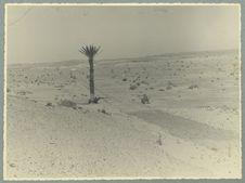 Sans titre [palmier en bordure d'une route dans un paysage aride]