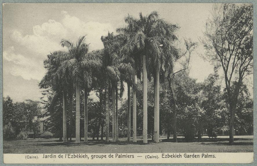 Caire. Jardin de l'Ezbékieh, groupe de palmiers