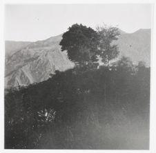Les arbres de la cour du pasteur