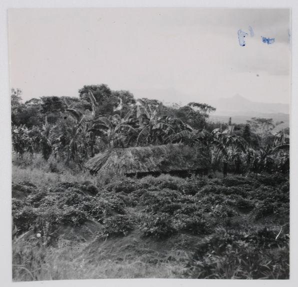 Olgenbeng, Nennga. Une maison de femmes dans un champ
