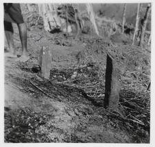 Chimbuluk. Le champ d'igname avec ses pierres