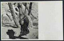 Au bord du puits dans la palmeraie et oliveraie