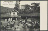 L'élevage au Brésil