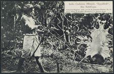 Indio Caduveo (Mbayá)