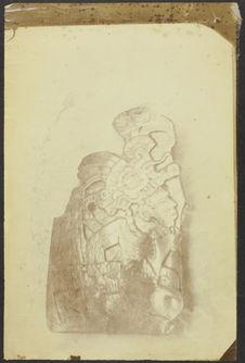 Tula. Type maya sculpté sur une coquille de nacre. Yucatan. [sic]