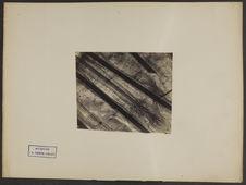 Sans titre [photographie microscopique : cuir chevelu. Coupe verticale. Racines...