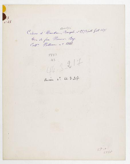 Inde. Bengale : crâne d'Hindou n° 5573 (Coll. Gall 149). Don de feu Prüner-Bey