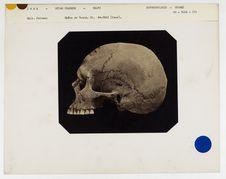 Inde. Uttar Pradesh : crâne de Gound, trouvé à Kalpi, n° 5580, Coll. Gall n°...