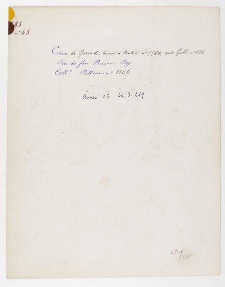 Inde. Uttar Pradesh : crâne de Gound, trouvé à Kalpi, n° 5580, Coll. Gall n° 156. Don de feu Prüner-Bey