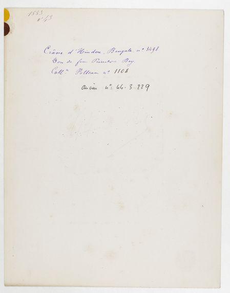 Inde : crâne d'Hindou, Bengale, n° 3498. Don de feu Prüner-Bey