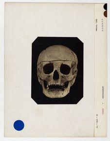 Algérie : crâne de femme Kabyle, n° 3861. Don de feu Prüner-Bey