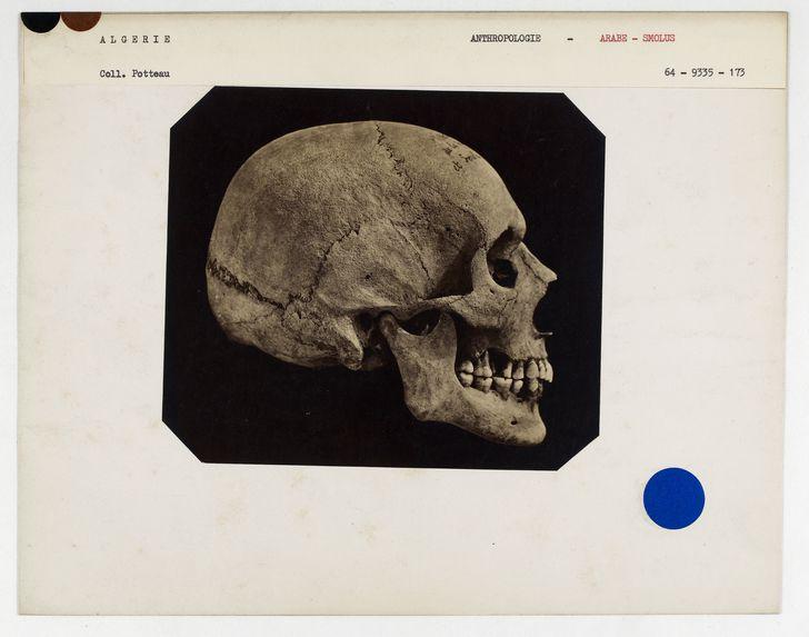Algérie. Arabe- Smolus : crâne d'Arabe, Tribu des Smelas, n° 220. Don de feu Prüner-Bey