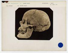 Iles Canaries : crâne de la Grande Canarie n° 3566. Don de feu Prüner-Bey