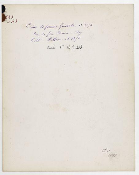 Iles Canaries : crâne de femme Guanche n° 3574. Don de feu Prüner-Bey