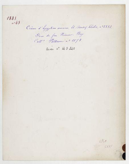 Egypte : crâne d'Egyptien ancien, El Assassif, Thèbes, n° 2332. Don de feu Prüner-Bey