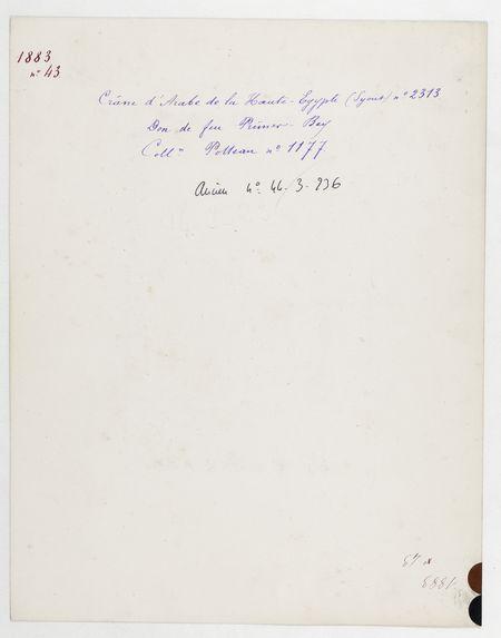 Egypte : crâne d'Arabe de la Haute-Egypte (Syout), n° 2313. Don de feu Prüner-Bey