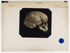 Mali : crâne d'enfant nègre, n° 1278. Don de feu Prüner-Bey