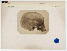 Sahara : crâne de négresse, n° 225. Don de feu Prüner-Bey