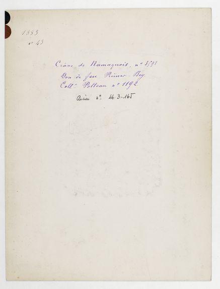 Afrique du Sud. Cap de Bonne Espérance : crâne de Namaquois Hottentot, n° 3591. Don de feu Prüner-Bey