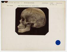 Afrique du Sud. Cap de Bonne Espérance : crâne d'homme Boschimane, n° 1604. Don...