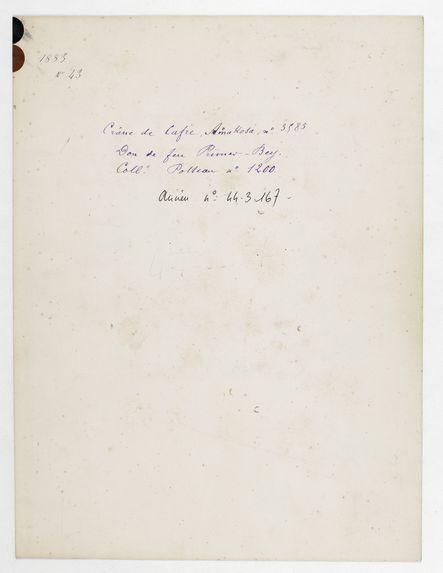Afrique du Sud. Cap de Bonne Espérance : crâne de Cafre, Amakosa, n° 3585. Don de feu Prüner-Bey