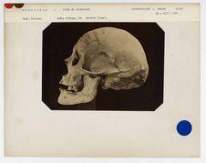 Venezuela. Rives de l'Orénoque : crâne d'Aturc, Orénoque, n° 3609. Don de feu...