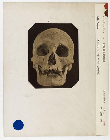 Venezuela. Rives de l'Orénoque : crâne d'Aturc, Orénoque, n° 3609. Don de feu Prüner-Bey