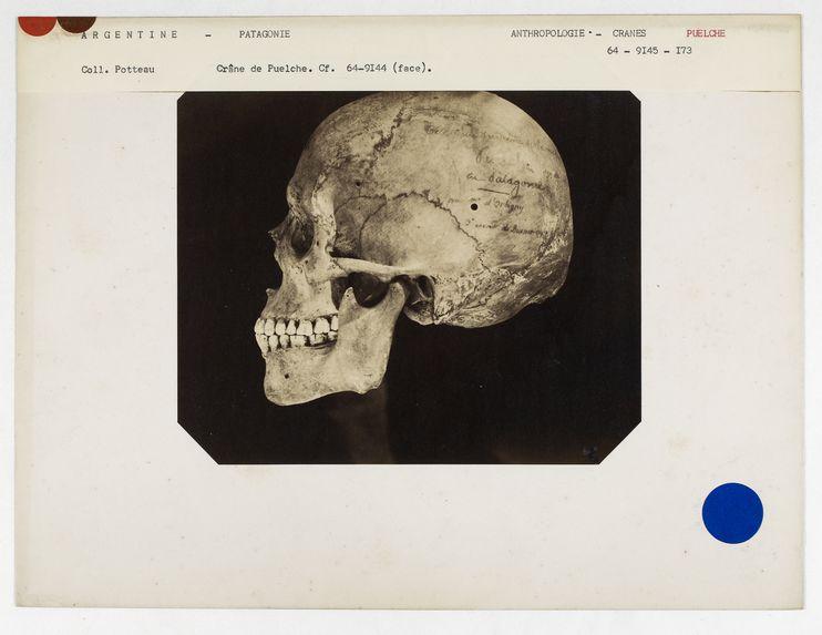 Argentine. Patagonie : crâne de Puelche, n° 1268. Don de feu Prüner-Bey