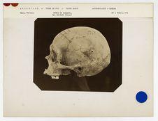 Argentine. Terre de Feu : crâne de Fuégien du Hâvre-Mercy n° 2283. Don de feu...