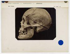 Crâne de Ma-Hanga-Maio