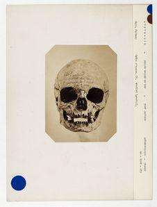 Australie. Nouvelles-Galles du Sud : crâne d'Australien de Port-Jackson n° 3628....
