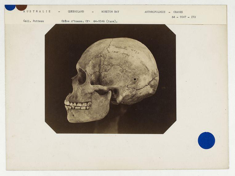 Australie. Queensland : crâne d'Australien de Moreton-bay, n° 1507. Don de feu Prüner-Bey