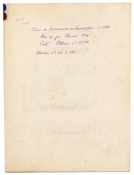 Tasmanie. Launceston : crâne de Tasmanien de Launceston, n° 1505. Don de feu Prüner-Bey