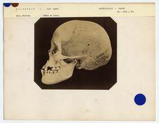 Polynésie : crâne de femme des îles Hawaï, n° 1711. Don de feu Prüner-Bey