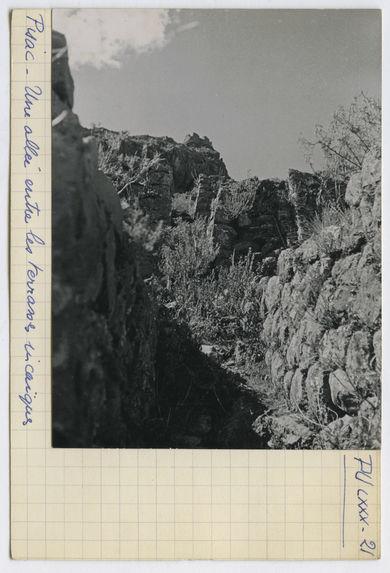 Une allée entre les terrasses incaïques