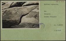 Bovides rupestres