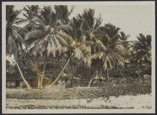 Mission IFAN Dekeyser-Holas au Libéria en 1948. [Village]