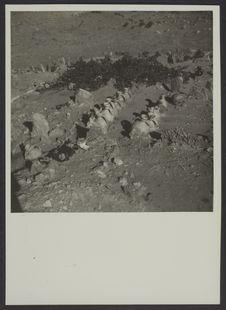 Cimetière d'El Goléa