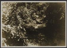 La forêt. Mission IFAN Dekeyser-Holas au Libéria en 1948