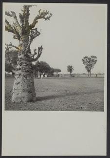 Type de paysage nigérien, Maradi